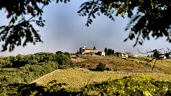Tuscan Vineyards 2