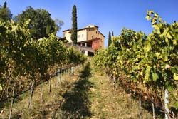 Tuscan Vineyards 3