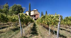 Tuscan Vineyards 4
